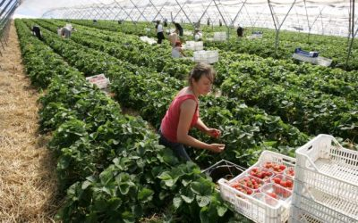 Graeme Dey MSP Underlines Brexit Threat to Rural Scotland's Seasonal Migrant Labour