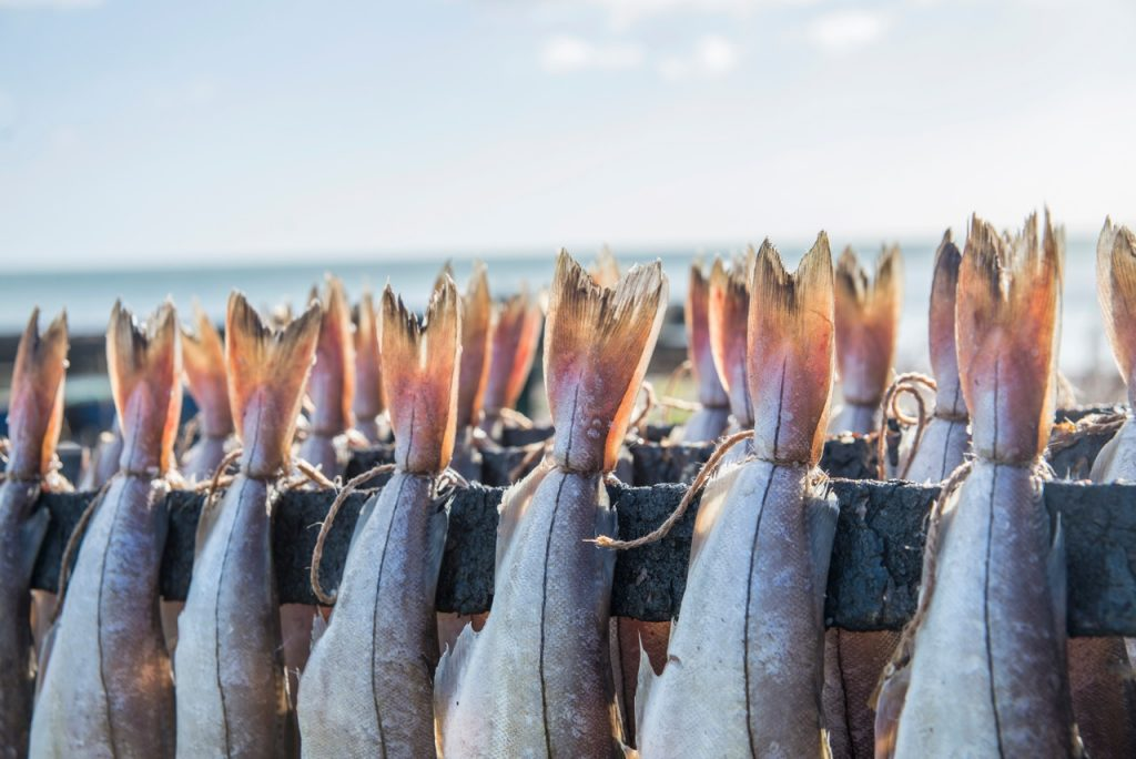 Arbroath smokies being prepared on the beach at Auchmithie.