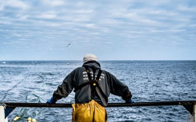 SCOTTISH SEAFOOD EXPORTERS LOSING £1M A DAY